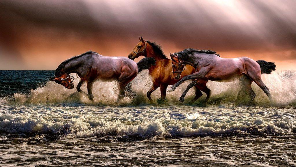 Paarden therapie Amsterdam