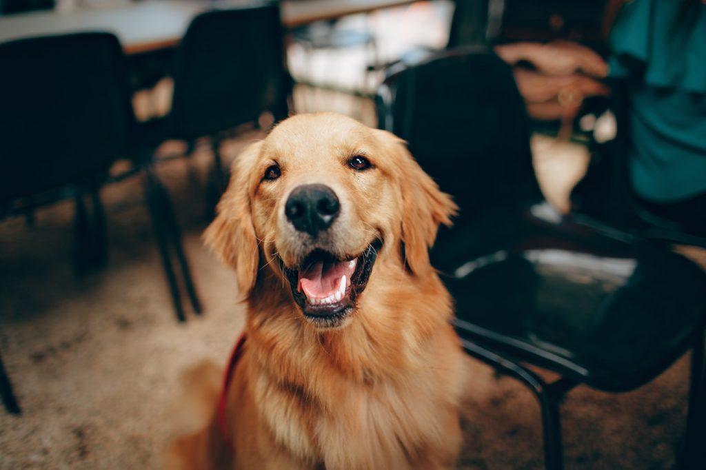 Hondenschool Zeeland