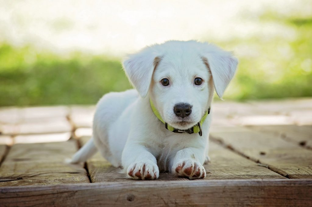 Benodigdheden puppy