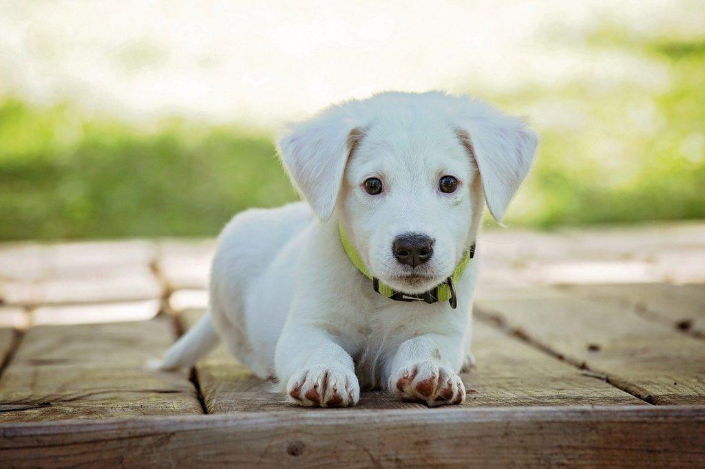 Geperste hondenbrokken